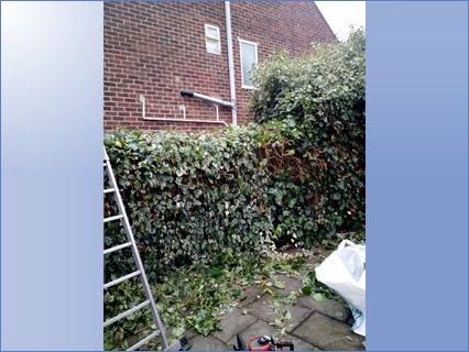 Trimming up a hedge
